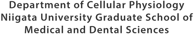 Department of Cellular Physiology Niigata University Graduate School of Medical and Dental Sciences